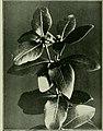 Plants of New Zealand (1906) (14783838762).jpg