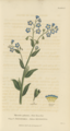 Plate 6 Myosotis Palustris - Conversations on Botany-1st edition.tiff