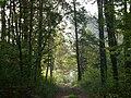 Poland. Konstancin-Jeziorna. Forest 007.jpg