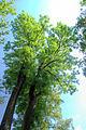 Polanica-Zdrój, lázeňský park, stromy HDR.jpg