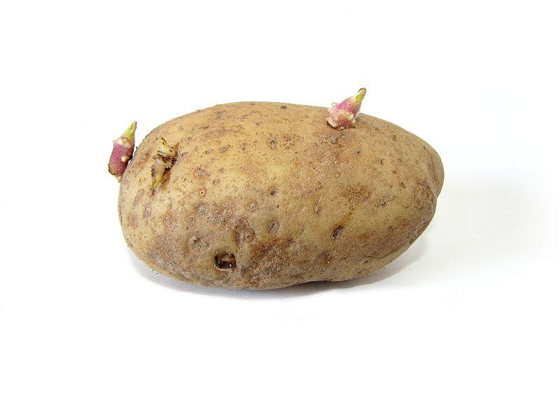 Potato And Sprouts Cake Recipes