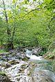 Povlen - zapadna Srbija - Povlenska reka - Detalj 7.jpg