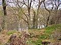 Premennan Wood - geograph.org.uk - 159950.jpg