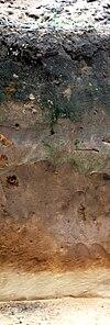 Пример почвенного профиля