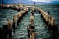 Puerto Natales - Flickr - Alanbritom (1).jpg