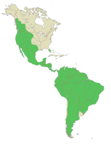 ocelot range map with Wild Cats on Threats together with Posts as well Fisher also Location Of The Western Lowland Gorilla besides Ocelot.