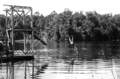 Queensland State Archives 1379 A header into Lake Barrine near Yungaburra NQ c 1935.png