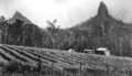 Queensland State Archives 2138 Mounts Beerwah and Crookneck Coonowrin Glass House Mountains c 1934.png