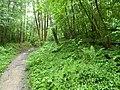 RNR du bois d'Encade dans la Vallée du Marbre (16).jpg