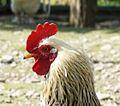 Ramnicu Valcea - zoo 7.jpg