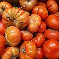 Rebellion tomatoes 2017 A3.jpg