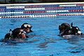 Recon Marines conduct pre-dive training 120404-M-DU087-419.jpg