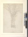 Redon - Tree, 1865.png