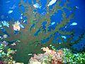 Reef0590 - Flickr - NOAA Photo Library.jpg