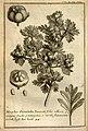 Relation d'un voyage du Levant (Plate 44) (7893923522).jpg