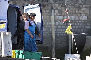 Retour de la pêche à la seiche du fileyeur Jason IV (57).JPG