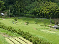 Rice terraces at Nose 01.JPG