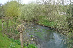 A narrow stretch of river with pollarded willow trees on both sides