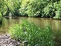River Camowen, Omagh - geograph.org.uk - 446016.jpg