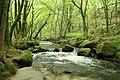 River Fowey at Golitha Falls - geograph.org.uk - 1469762.jpg