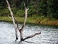River bank (913236622).jpg