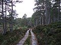 Road, Abernethy Forest - geograph.org.uk - 612769.jpg