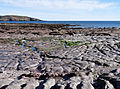 Rock platform west of Wembury.jpg