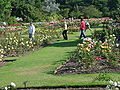 Rose Garden Roath Park.jpg