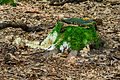 Rotten stump covered with moss fungi and slime molds - verfallener Baumstumpf mit Moos und Pilzen - 01.jpg