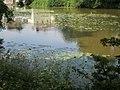 Ruhiges Wasser der Lahn mit blühenden gelben Teichrosen oberhalb Grüner Wehr Marburg 2018-06-08.jpg