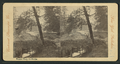 Russian River, California, from Robert N. Dennis collection of stereoscopic views.png