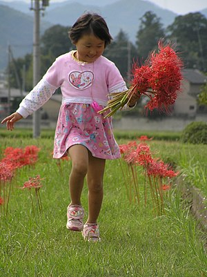 Lycoris radiata - Girl with red spider lily