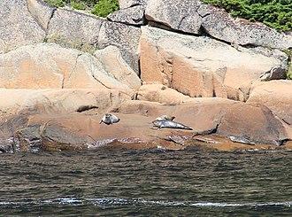 Saguenay Fjord National Park - Image: Saguenay Fjord Seals