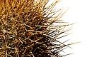 Salar de Uyuni 08.jpg