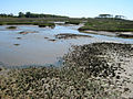 Salt marsh at Waties Island.jpg