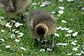 Sandringham 23-05-2011 (5761325220).jpg
