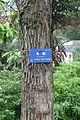 Sapium sebiferum - Chengdu Botanical Garden - Chengdu, China - DSC03470.JPG