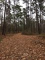 Sardis Nature Trails 10.jpg