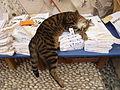 Schlafende Katze in Lindos, Griechenland.jpg