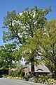 Schleswig-Holstein, Mönkloh, Naturdenkmal 1112-2 NIK 3753.JPG