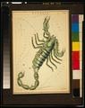 Scorpio etching.tif