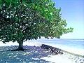 Seaside yonature.jpg