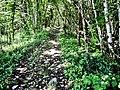 Sentier sur le rempart est de l'habitat fortifié du Grammont.jpg