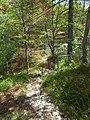 Sentiero nel bosco M. Lefre.jpg