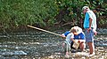 Service biologist Bryan Tompkins showing a young stream visitor what comes up in a kick net (5029134265).jpg