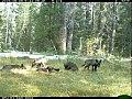 Shasta Pups (26340165489).jpg