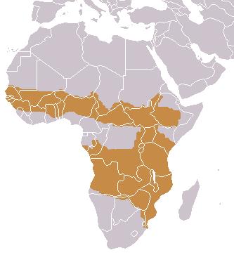 Side-striped Jackal area