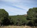 Sidi Maafa 04.png