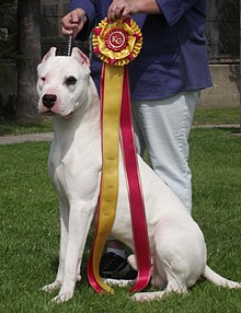 Dogo Argentino Resource | Learn About, Share and Discuss