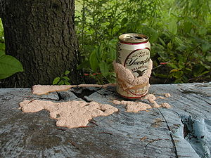 A Slime mold growing on a beer can